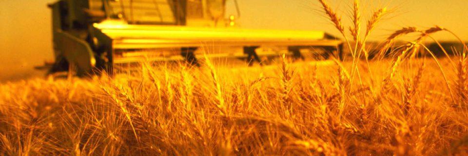 Семена подсолнечника и кукурузы плюс технологии выращивания от наших специалистов – залог высокого урожая при оптимальных затратах